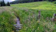 la VRAIE nature (LILI 296 ...) Tags: ecosse highlands nature prairie barbel cloture canonpowershotg7x flaures ruisseau