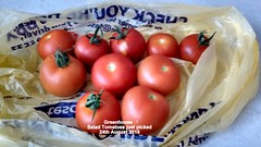 Greenhouse - Salad Tomatoes just picked 24th August 2016 (D@viD_2.011) Tags: greenhouse salad tomatoes just picked 24th august 2016