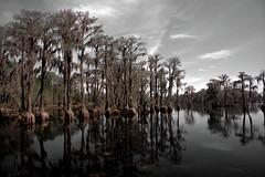 Bald Cypress on Banks Lake (Mike McCall) Tags: ©2016mikemccall georgia bankslake nationalwildliferefuge laniercounty nature cypress baldcypress water lake landscape fineart
