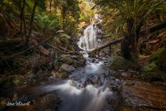 Silver Falls (SteveWhitworthPhoto) Tags: australia tasmania northerntasmania nietta silverfalls waterfall longexposure littlestopper nikon nikond800e nikon1635mmf40