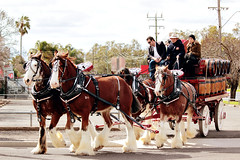 IMG_7207 (Click. Boom.) Tags: horse horses drafthorses clydesdales carton beer brewery horseandcart driving