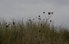 IMG_1057 (EadaoinFlynn) Tags: curracloe beach sea ireland irishsea wexford