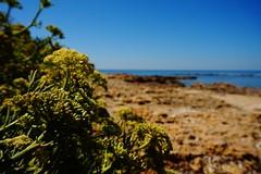 (angelapace1) Tags: bagnidisantagostino mare tarquinia vegetazione scogli piantegrasse fiori orizzonte