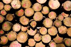 ckuchem-8289 (christine_kuchem) Tags: abholzung baum baumstmme bume einschlag fichten holzeinschlag holzwirtschaft wald waldwirtschaft