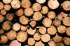 ckuchem-8289 (christine_kuchem) Tags: abholzung baum baumstämme bäume einschlag fichten holzeinschlag holzwirtschaft wald waldwirtschaft