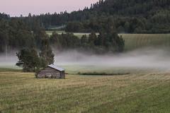 Dimma 1 (mcqal) Tags: fog barn meadows forest autumn evening nikon d800 nikonafsnikkor200500mm56eedvr