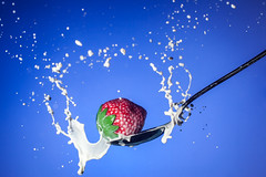 Strawberry / Spoon / Milk (chrismar) Tags: fruit canon studio 350d 50mm milk strawberry review spoon fav20 september rebelxt splash fav30 ios 2012 soundtrigger iphone highspeedphotography fav10 offcameraflash views100 explored fav40 strobist chrismartino triggertrap triggertrapmobile