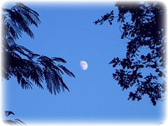 Moon Over Chestnut Mound (John C. Akers jr.) Tags: moon over chestnut mound