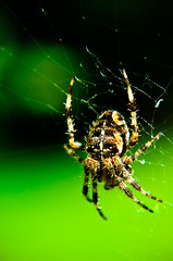(Damien Cox) Tags: uk green nature garden spider nikon web damiencox dcoxphotographycom