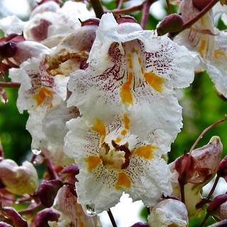 Natte bloemen - (1) - Wet flowers