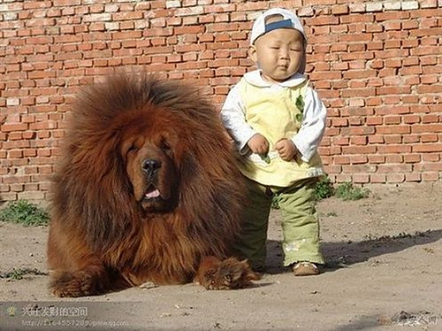 Little Boys like Big Furry Dogs!