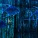Aquarios recheados de vida marinha