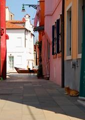 (texaskim81 **busy**) Tags: dog colors cane cat island nikon colours august agosto venezia colori gatto viaggi vacanze burano isola d80 1685mm