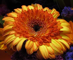 Sept 22, 2012 041 (KatieKal) Tags: hennysgardens sunrays5 sept222012
