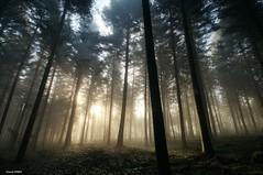 Brume et Soleil dans la forêt  ** Sun and mist in the forest ** (francky25) Tags: sun mist forest la soleil et dans forêt brume doubs comté franche alaise