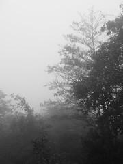Nebbia di fine settembre (Yuliya Pelyno) Tags: autumn nature fog last wow photo foto natura september nostalgia nebbia autunno malinconia