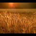 "Barley field • <a style=""font-size:0.8em;"" href=""http://www.flickr.com/photos/35150094@N04/8045368894/"" target=""_blank"">View on Flickr</a>"