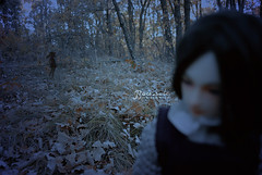 In the Forest 14 (~[Boussole]~) Tags: seth bjd