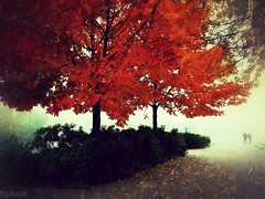Secret Rendezvous (flipkeat) Tags: thanksgiving autumn trees canada colour fall beautiful leaves fog port landscape outdoors landscapes october colours different unique secret credit dreamy mississauga picturesque outono rendezvous portcredit dmczs5 blinkagain snapseed