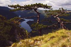 Radiša Živković - Witnesses of time (Radisa Zivkovic) Tags: mountain lake tree nature pine river nikon scenery europe tara serbia canyon srbija top20poster banjskastena