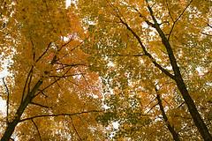 Parc du Mont Wright (Jean-David & Anne-Laure) Tags: autumn canada automne quebec stoneham montwright
