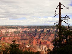 View from the Edge (nickmastrini) Tags: blue summer vacation arizona sky usa holiday tree beauty birds silhouette clouds composition landscape warm picnic grandcanyon deep grand roadtrip canyon ravens vaca 2012