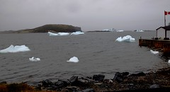 A lot of ice in the L'Anse aux Meadows area, Newfoundland (Joseph Hollick) Tags: ice iceberg nd newfoundland lanseauxmeadows