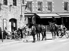 Portsall - Scene on the harbour street (patrick_milan) Tags: noiretblanc blackandwhite noir blanc monochrome nb bw black white street rue people personne gens streetview cheval scene