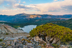 Beyond Hope - El Dorado County, California (Tactile Photo | Greg Mitchell Photography) Tags: landscape soft eldoradocounty clouds bluesky carsonpass lonetree sierranevada tree california august thursday granite color pine sunset light