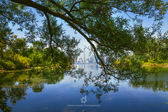 Toronto Skyline Framed with Willow Tree (fesign) Tags: architecture buildingexterior cntower canada centrum citylife colourimage day discovery downtown famousplace growth horizontal lake nature nopeople ontariocanada outdoors photography scenics sky skydome skyline skyscraper sunfishcut toronto tower travel traveldestinations tree urban wardsisland waterfront willow