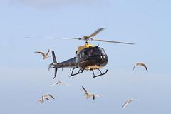 Startled Gulls 0077 (gofirecrest) Tags: squirrel helicopter gulls canoneos100d bournemouth airshow bournemouthfestivaloftheair bournemouthairfestival gull sigma 100300 ex dg sigma100300mmf4exdghsmapo