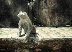 Rustic frog (flowerweaver) Tags: frog sculpture cement studio art bench gardenart fauxbois trabajorustico