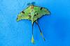 Borboleta (MickPt) Tags: animais animals insectos insects lumix maputo mocambique mozambique tz10