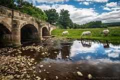 Bridge, River, Horses (jasonmgabriel) Tags: bridge river water reflection rocks field clouds horses animals scenery landscape yorkshire dales