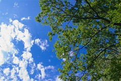 breathe (HJK Photography) Tags: sky trees perspective clous green blue air