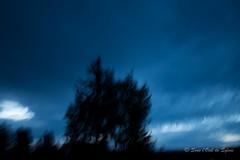 Quand la Nuit se Sauve Lentement (Srie les Bleus) EXPLORE (Sous l'Oeil de Sylvie) Tags: arbres trees night nuit matin morning flou boug blur mouvement blue bleu sousloeildesylvie ciel sky nuages clouds artistique art pentax ks2 sigma1020mm aout august t summer