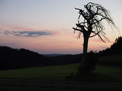 ohne Titel (p601e) Tags: olympus epl3 slrmagic 25mm sauerland hhenflug outdoor