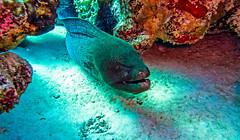face you fear (werner boehm *) Tags: wernerboehm redsea scuba diving murne scubadiving