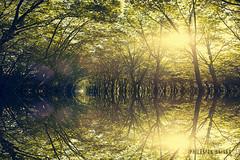 la vrit est au bout du tunnel (Philmon Shivar) Tags: arbre symtrie tunnel bois nature france lumire