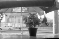 (kocmonosy) Tags: canonae1program 50mmf18 analog film 35mm fomapan200