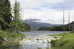 Waters around Kaien Island, BC. (Alan Vernon.) Tags: landscape trees water mountains snowcapped scenery scene prince rupert british columbia canada