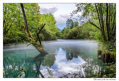 The source of the river Livenza (tom22_allgaeu) Tags: humuspark santissima friuliveneziagiulia italien italy italia europa europe nikon natur nature landscape landschaft nebel fog river fluss livenza tamron d3200 wasser water spiegelung reflection green quelle source