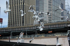 Sky dancers (giuliapretini) Tags: sydney viaggiare viaggio travel australia cielo sky seagulls gabbiani