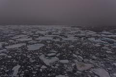 In the ice (Elvar H) Tags: arcticocean helmerhansen siarctic ice iceedge