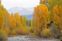 fall in the mountains (Dianne M.) Tags: colorado fall colors river nature outside september