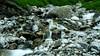 DSC_8861 (Sivaraj Mathi) Tags: nikon himalaya hemkund valleyofflowers vof nikond5000 himayam