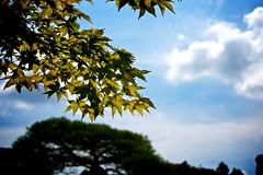 (sinkdd) Tags: summer sky cloud japan nikon kyoto japanesemaple 京都 nikkor sunbeam 銀閣寺 庭園 18200mm 慈照寺 日本庭園 東山慈照寺 d7000 nikond7000 sinkdd