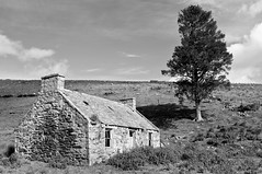 Largue, Glenkindie (James_at_Slack) Tags: bw tree abandoned farmhouse rural scotland aberdeenshire sheep heather hill cottage croft derelict decayed lonetree glenkindie largue