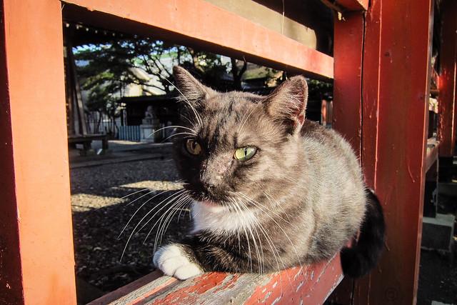 Today's Cat@2012-09-09
