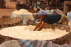Cassava mash (IITA Image Library) Tags: women cassava manihotesculenta cassavaprocessing cassavamash